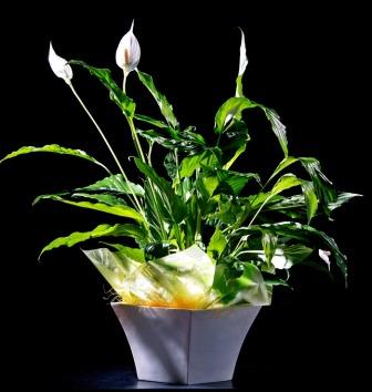 Noticias como enviar flores a domicilio las mejores florister as online - Plantas de interior online ...